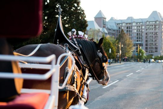 Tally-Ho horse-drawn carriage showcasing Victoria's culture