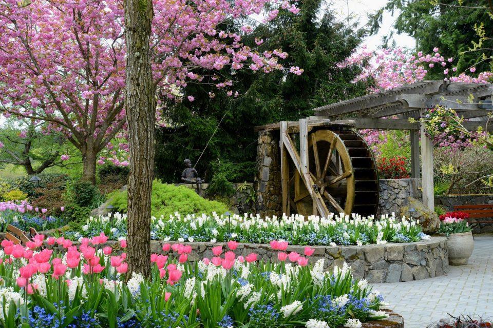 Tulips Butchart Gardens