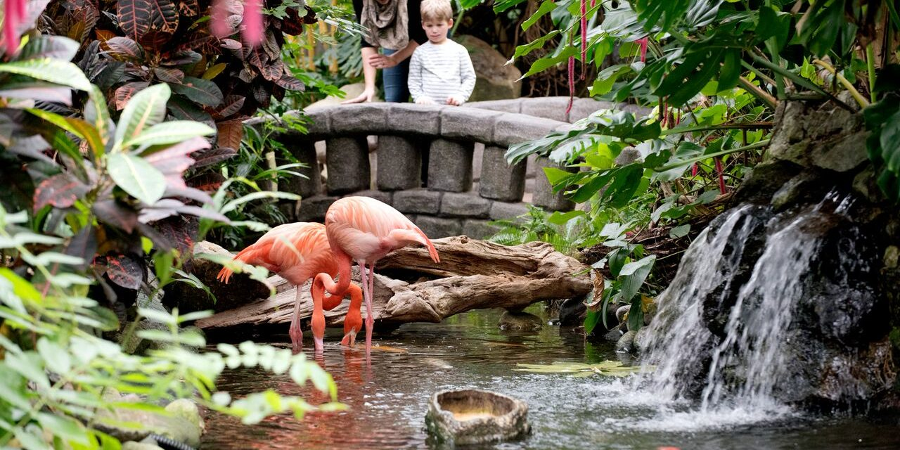 butterfly gardens flamingo