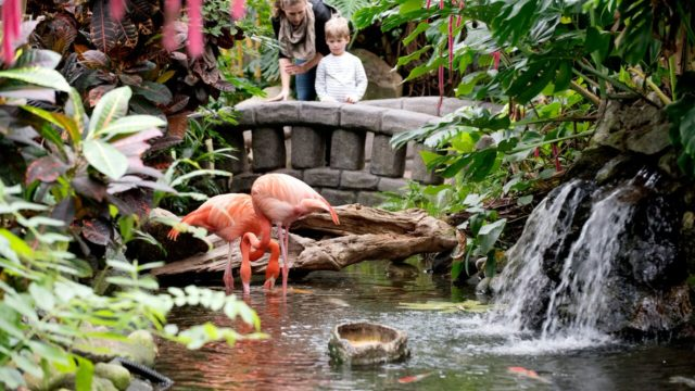 Flamingos at the Victoria Butterfly Gardens