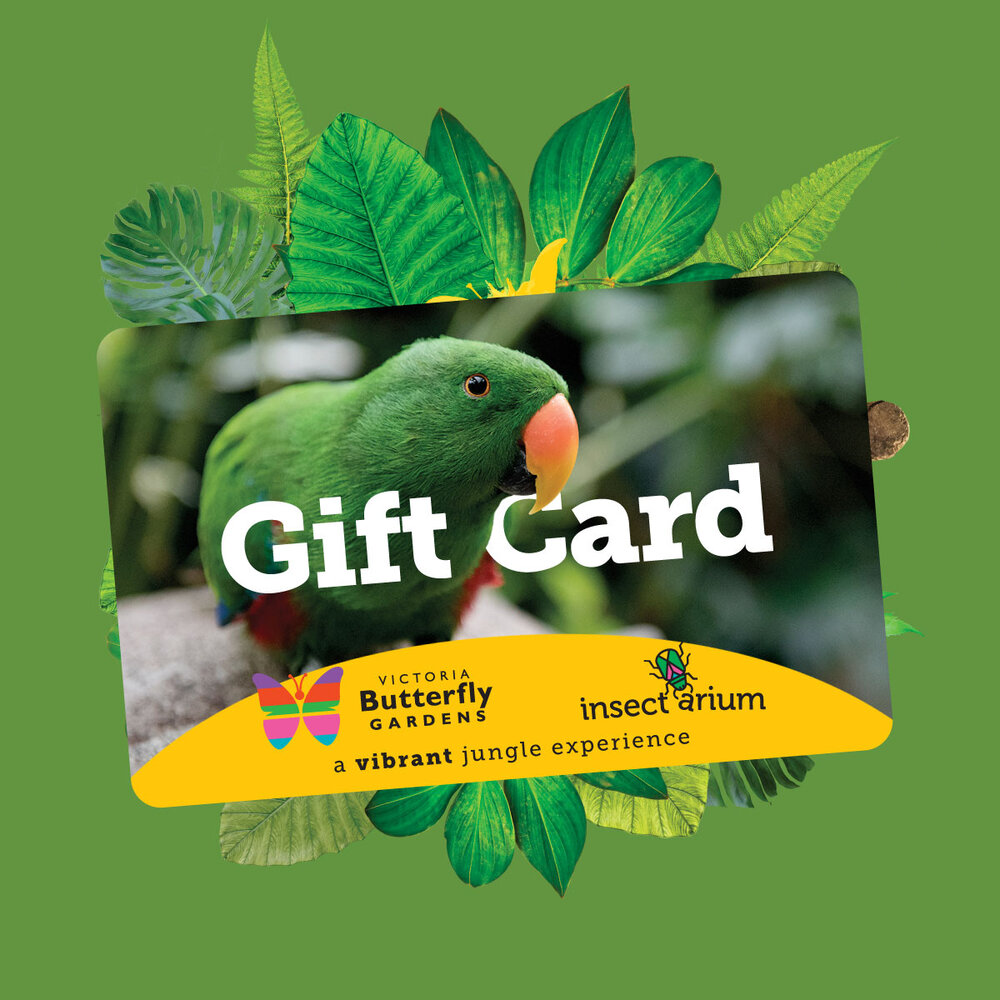 Victoria Butterfly Gardens Gift Card COvid 19